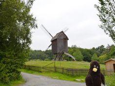 Erwin und eine Windmühle.