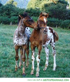 Beautiful Foals
