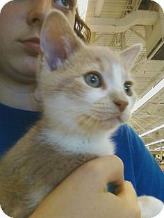 Adopt a Pet :: Photo 1: Clover - Riverhead, NY -  Domestic ShorthairMix