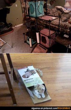 Le preparas la mejor casa para gatos y te hace esto.