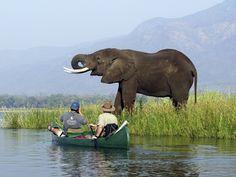 #mana #wilderness #elephant #safari #holiday