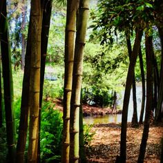 Great shot of the bamboo grove by instagrammer @joeydolensq9