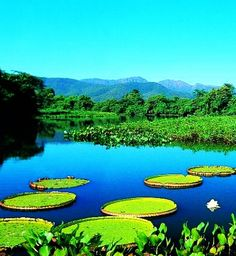 Pantanal, Brazil  | ... the World RTW -family activities Budget Travel Pantanal in Brazil