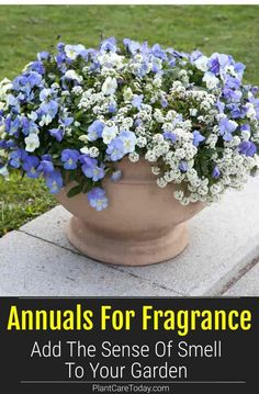A list of amazing annuals to add to your garden for fragrance during both spring and summer. Several annuals are covered for each season in this guide. [DETAILS] Annual Flowers For Shade, Shade Flowers, Small White Flowers, Colorful Flowers, Beautiful Flowers, Petunia Plant, Low Maintenance Plants, Growing Seeds, Fall Plants