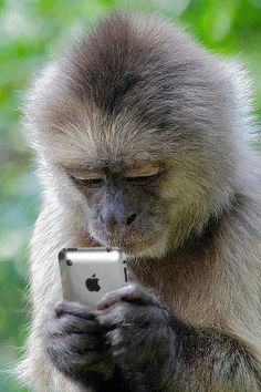 monkey checking out a phone. Monkey see, monkey do! Primates, Mammals, Animals And Pets, Baby Animals, Funny Animals, Cute Animals, Beautiful Creatures, Animals Beautiful, Animal Pictures