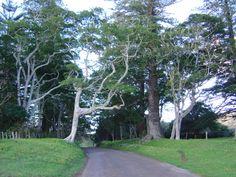 Anson Bay Road, Norfolk Island