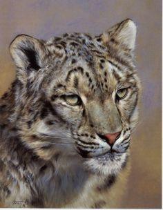 Snow Leopard Portrait by Edward Aldrich