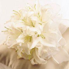83 Best Wedding Bouquets Images Wedding Bouquets