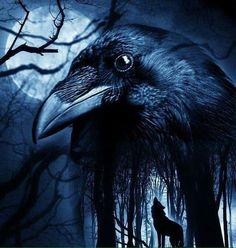 Saved by Celtic 🐉 Dragon. Saved by Celtic 🐉 Dragon. Saved by Celtic 🐉 Dragon. Raven And Wolf, Raven Bird, Crow Art, Bird Art, Rabe Tattoo, Crow Painting, Memes Arte, Beautiful Dark Art, Norse Tattoo