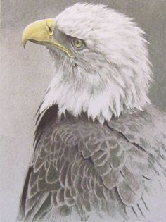 """Bald Eagle"" by Robert Bateman"