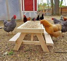 You've probably seen the mini picnic table for squirrels that let the squirrels and chipmunks in your backyard sit down and enjoy a meal at a proper table, well, now there's one for chickens as well. Chicken Garden, Backyard Chicken Coops, Chicken Coop Plans, Diy Chicken Coop, Chickens Backyard, Chicken Feeders, Small Chicken Coops, Chicken Tractors, Pet Chickens