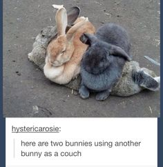 Find images and videos about animal, bunny and rabbit on We Heart It - the app to get lost in what you love. Funny Animal Memes, Cute Funny Animals, Funny Animal Pictures, Cute Baby Animals, Funny Cute, Animals And Pets, Rabbit Pictures, Animals Planet, Funny Bunnies