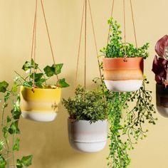 Ceramic Planters, Planter Pots, Sass & Belle, Colorful Plants, Mellow Yellow, Hanging Planters, Indoor Garden, Home Decor Accessories, Potted Plants