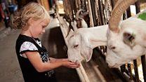 Goatfarm Ridammerhoeve