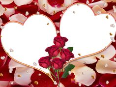 beautiful horse frames for pictures Valentine Day Photo Frame, Valentines Day Photos, Flowery Wallpaper, Wallpaper Space, Hd Wallpaper, Best Photo Collage, Photo Collages, Wedding Anniversary Photos, Montage Photo