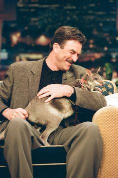 Actor Tom Selleck on March 9 1998 Tom Selleck, Jesse Stone, Toms, I See Stars, Sam Elliott, Magnum Pi, Blue Bloods, Tv Actors, Star Pictures