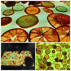 Beautiful light table exploration with dried fruits. Credit-Edita Slunjski (Zagreb, Croatia- via The Reggio Emilia Approach Group (Facebook)