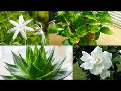 8 Plants to keep in your Bedroom for Better Sleep - YouTube
