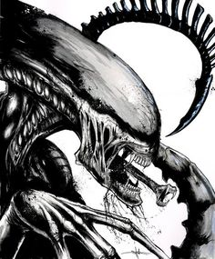 aliensandpredators:  viafallinguptherabbithole