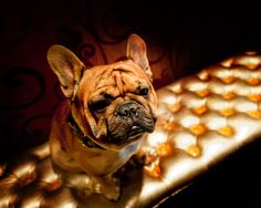 Hippo - the Guest Relations Manager at L'Hermitage Hotel, Vancouver
