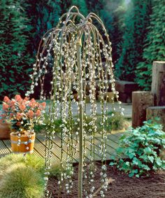 Seedling & Sprout Live Weeping Pussy Willow Tree | zulily