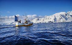 Fishing adventure #HattvikaLodge #Lofoten #Norway #AdventureTourism
