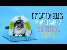 DIY- Easy To Make Petting Station That Your Cats Will Love!