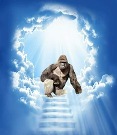 One year ago today Harambe passed away