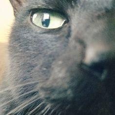 【arinco703】さんのInstagramをピンしています。 《猫さんおはよ☺ . 風が強くなるらしいにゃん🌀 . #猫さん#黒猫#猫#ねこ#ネコ#cat#犬#イヌ#いぬ#dog#ペット#pet#ねこら部#いぬら部#チワワ#ダックス#カニヘン#チョコタン#ブラックタン#湘南#江ノ島#海 #強風》