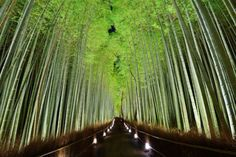 Het Bamboe Pad – Kyoto