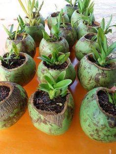 Idéia genial para cultivar orquídeas!