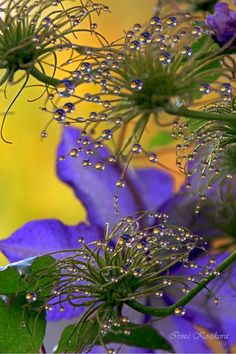 droplets on nature so beautiful : http://www.travelinfreejustyouandme.com