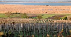 Burgenland - Powerful wines from the land of sunshine