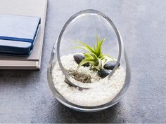 These terrariums and Zen gardens, discovered by The Grommet, double as living pieces of art. Enjoy a small dose of greenery indoors that's easy to care for. Cut Glass, Glass Art, Diy Candle Wick, Inside Plants, Touch Lamp, Garden Shop, Glass Vessel, Unique Home Decor, Hand Blown Glass