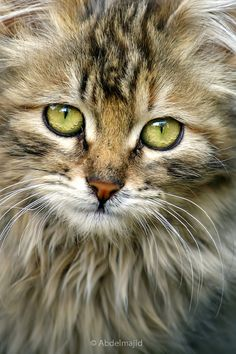 Cat by A.A abdelmajid