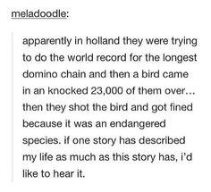 domino chain in Holland. bird. shooting. tumblr