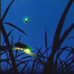 I just love seeing electric little fireflies on a warm summer night!