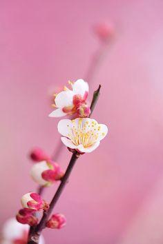 By *Sakura*