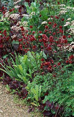 ANTHRISCUS RAVENSWING,AQUILEGIA VULGARIS DOUBLE RED AND ATRIPLEX HORTENSIS RUBRA. HADSPEN GARDEN,SOMERSET