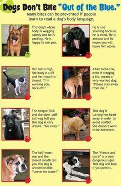 Learn 2 Read A Dog's Body Language