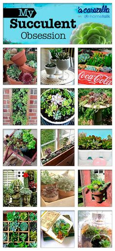 Tons of great projects you can do with succulents!