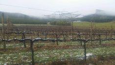 Alpine Valleys wine region see the list of wineries producing alternative varietal wines #australian wine Warm Wine, Orange Wine, Falls Creek, Yarra Valley, Australia Map, Deciduous Trees, Wineries, Beautiful Landscapes, Tourism