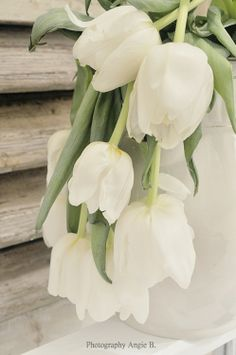 White tulips... by Angie B.