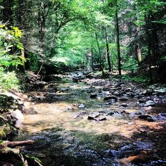 Cohutta Wilderness North GA. Most of our weekend have been here lately. Natures goodness! #cohutta #ga #nature