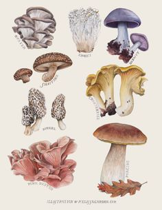 Edible Mushrooms by Melissa Garden for Edible East Bay Magazine - Pilze - Mushroom Drawing, Mushroom Art, Mushroom Hunting, Mushroom Fungi, Botanical Drawings, Botanical Prints, Edible Mushrooms, Stuffed Mushrooms, Illustration Botanique