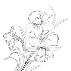 Seamless pattern with white lily flowers | Vector | Colourbox