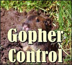 Gopher Be Gone On Pinterest