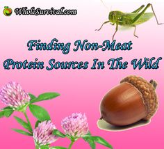 Survival Foraging - Finding Non-Meat Protein Sources In The Wild - Part 2 - Nuts  http://www.wholesurvival.com/food/foraging/30-protein-from-wild-plants-nuts
