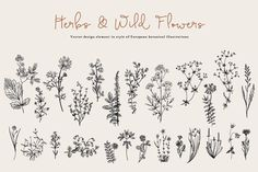 Herbs & Wild Flowers. Set by olga.korneeva on @creativemarket