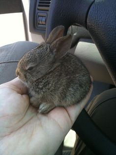 I like looking at this baby bunny almost as much as I like looking at Timothy Olyphant in Justified.